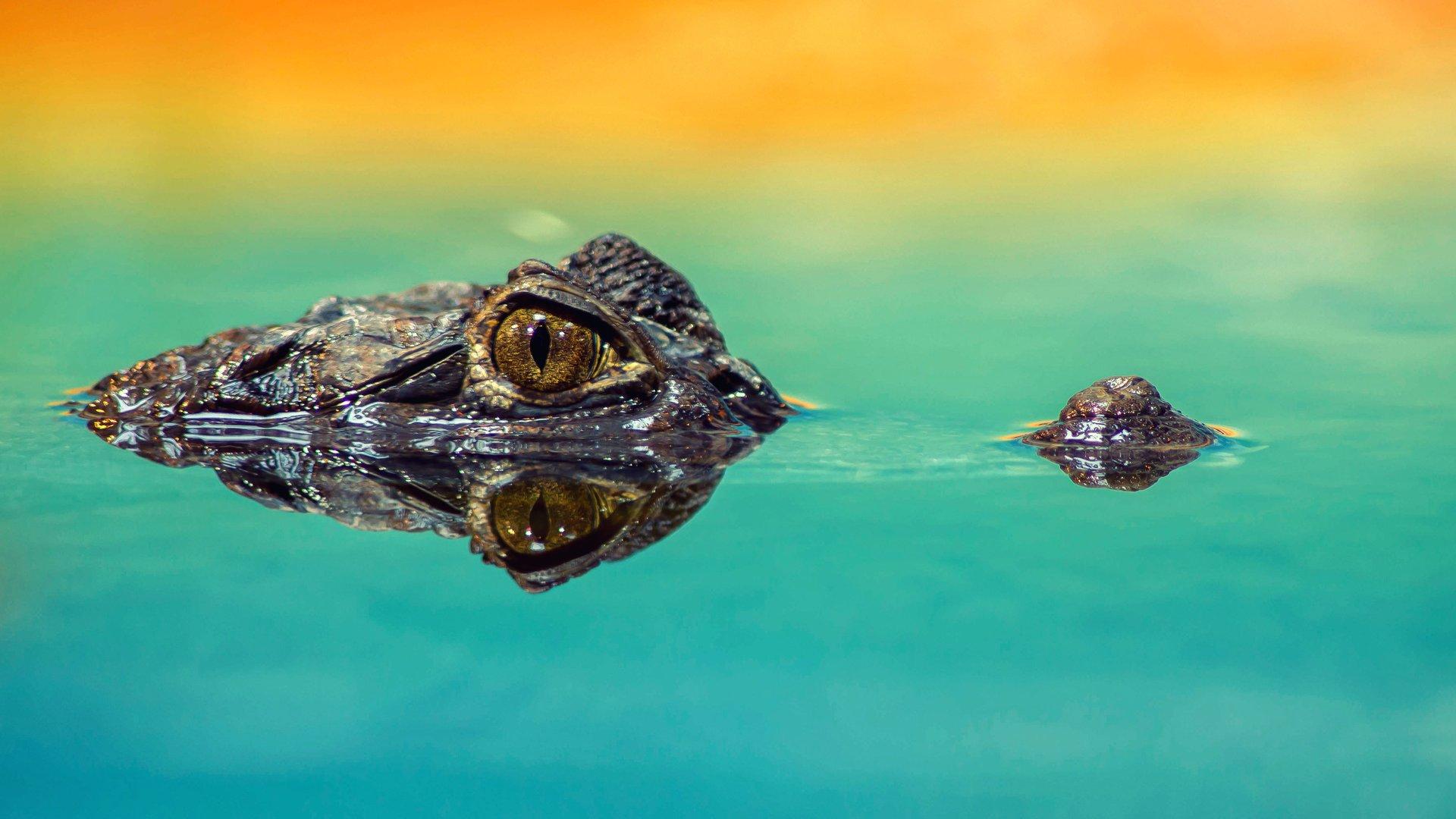 Crocodiles in Uganda