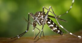 Malaria in Uganda, Prophylaxis & Prevention