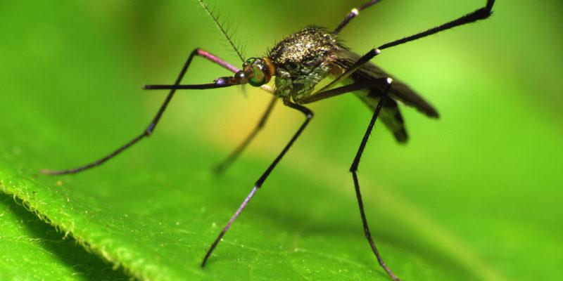 Malaria in Uganda