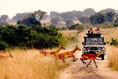 Best time to visit Uganda for a Safari or Holiday