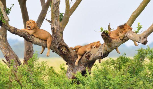 Uganda Tourism Industry