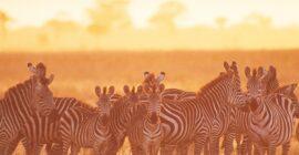 Low Seasons & High Seasons in the Uganda Tourism Industry