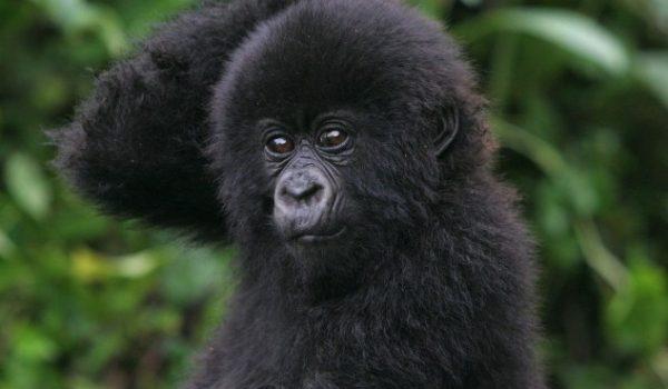 Gorilla Trekking Companies