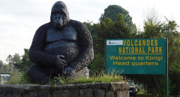 Rwanda Tour Operators, Safari Companies