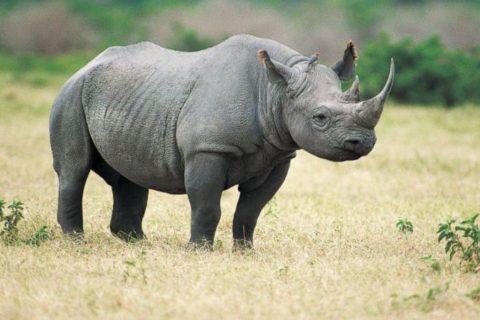 Rhinos Return to Rwanda's Akagera National Park after 10 Years