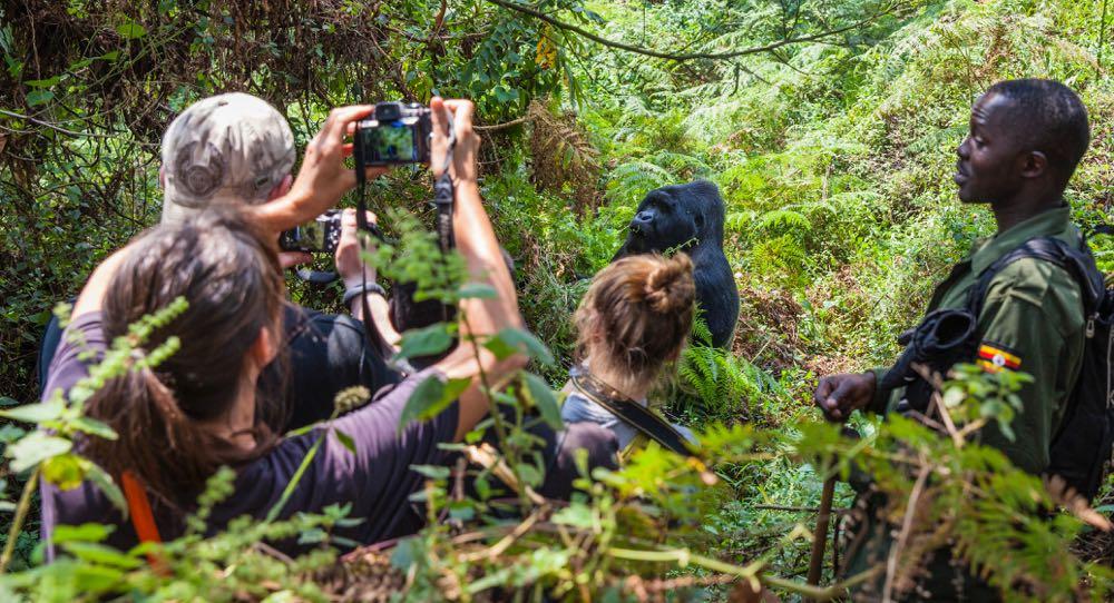 Definition of Gorilla Trekking