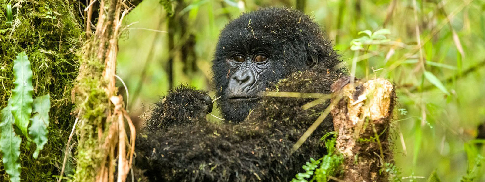 Booking Bwindi Gorilla Trekking Safaris from Entebbe Kampala