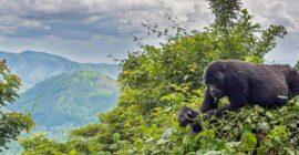 Best Uganda Tour Operators, Safari Companies & Travel Agents