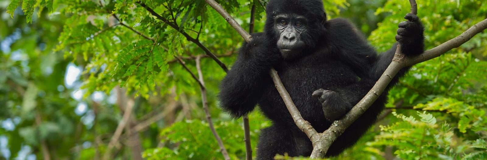 Top 24 Wildlife Animals to See in Uganda