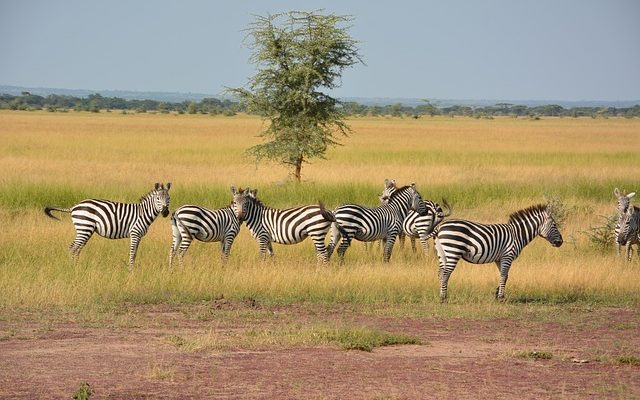 Best East Africa Tour Operators