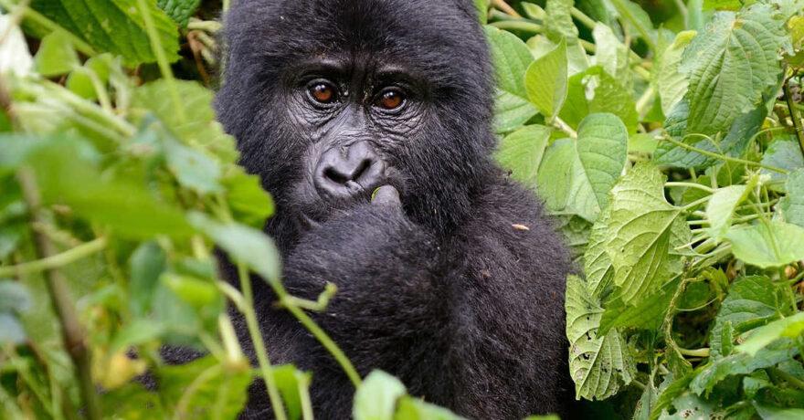 Step by Step Guide for Booking a Memorable Safari in Uganda