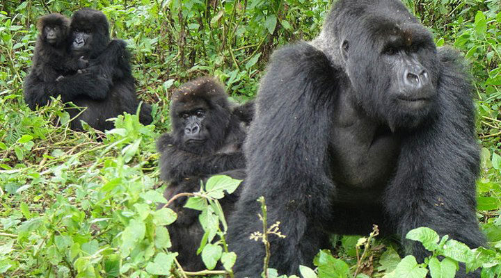 Why is Gorilla Trekking so Expensive