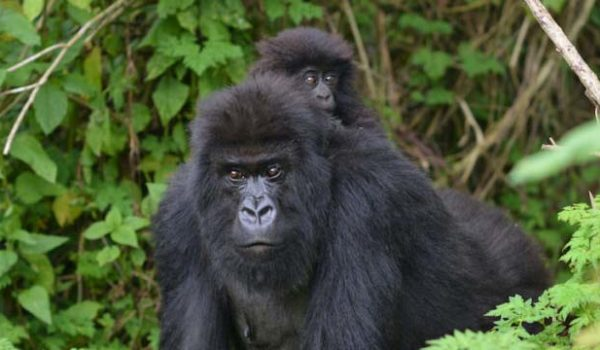 Wildlife Animals to See in Uganda