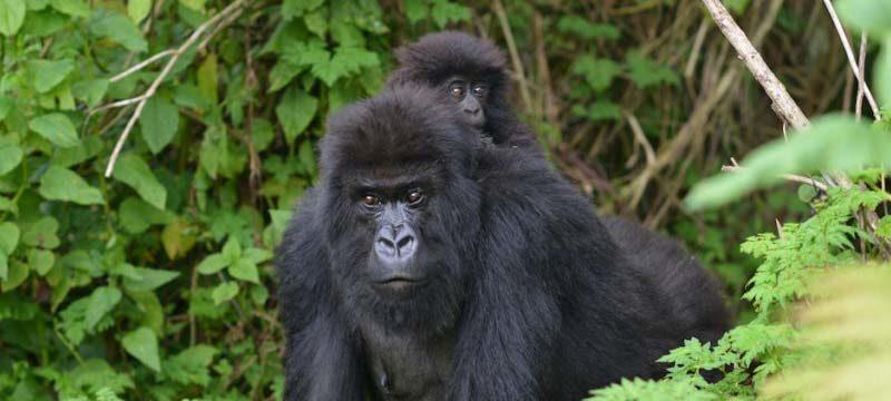 Wildlife Animals to See in Uganda