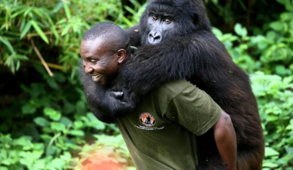 Virunga National Park Congo Re-Opens for Tourism