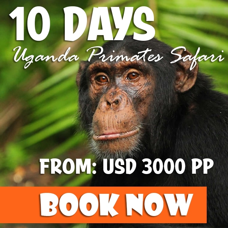 10 Days Uganda Safari Offer