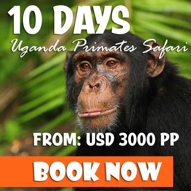 10 Days Uganda Safari Offer